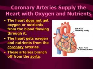 coronery artery1